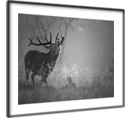 Prints Of Richmond Park London