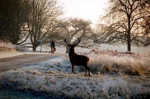 Cycling in Richmond Park