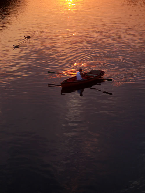 Rower on the River Thames at sunset