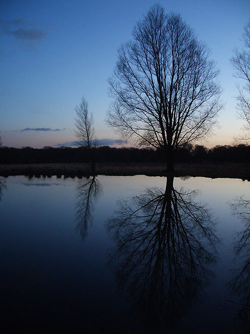 Trees reflected in Richmond Park