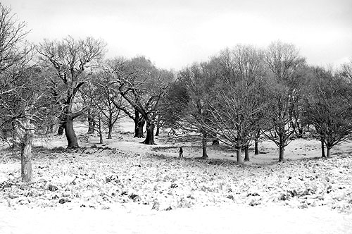 Winter Landscape in Richmond Park